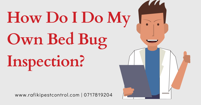 DIY bedbug inspection